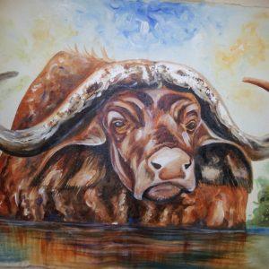 nature-buffalo